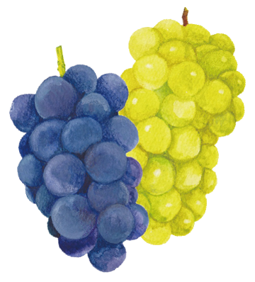 grape_img