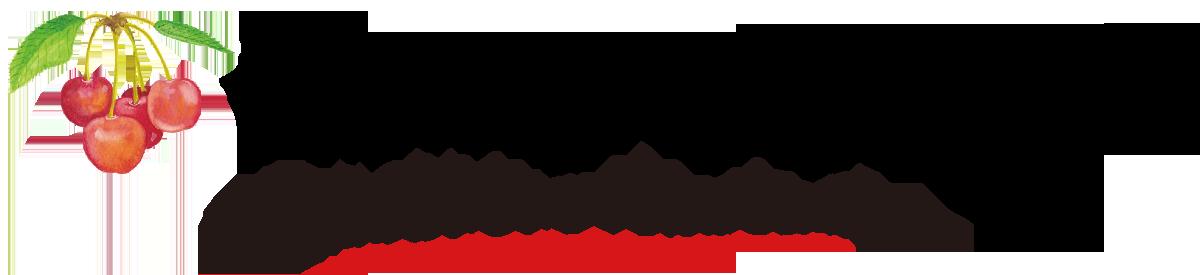 松川町のさくらんぼ狩り